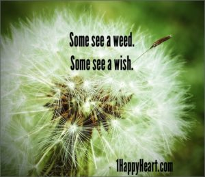 Some see a weed. Some see a wish.