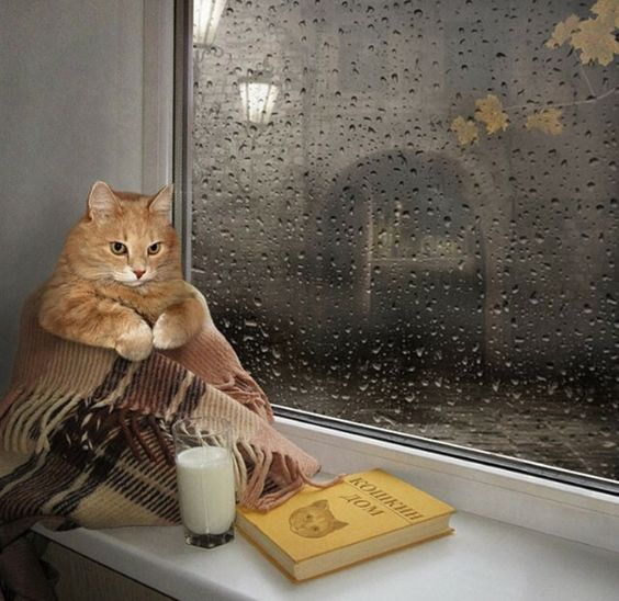 rainy-cat