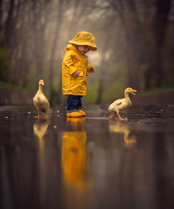 rainy-ducks